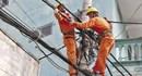 Xử lý 272 vụ vi phạm hành lang lưới điện cao áp