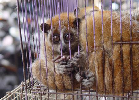 Việt Nam cam kết mạnh mẽ chống buôn bán trái phép động vật hoang dã