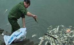 Cá chết trắng ao vì nhiễm độc nước thải nhà máy