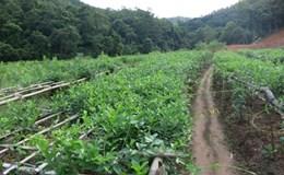 Quảng Ninh xây dựng Vườn dược liệu quốc gia Yên Tử
