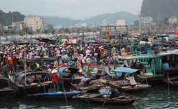 """Phóng sự ảnh """"Chợ cá bình minh Hạ Long"""""""