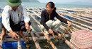 Nông nghiệp Quảng Ninh: Tái cơ cấu, nâng cao giá trị gia tăng và phát triển bền vững