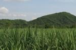 FLC và Vingroup đồng loạt đầu tư vào nông nghiệp Thanh Hóa