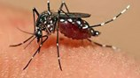 """Thủ phạm gây dịch bệnh """"teo não"""" là do muỗi biến đổi gen"""