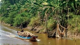 U Minh Hạ: Lá rừng thì xanh, còn người héo hon, khắc khoải