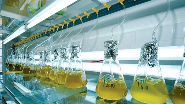 Trứng Artemia nhập khẩu dùng làm thức ăn cho tôm.