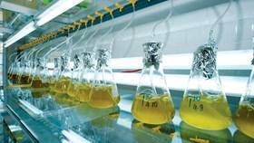 Áp thuế nhập khẩu 3% trứng Artemia: Bộ NN&PTNT, VASEP lên tiếng, hàng loạt DN kêu cứu