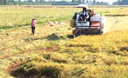 ĐBSCL: Nơm nớp lo gieo sạ sớm vụ Đông Xuân