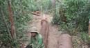 Vụ ai bảo kê gỗ lậu tại Tây Nguyên: Ai cướp 45 lóng gỗ?