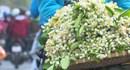 Hoa bưởi vài chục nghìn một lạng hút người mua khắp Hà Nội