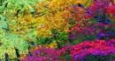 Hình ảnh thiên nhiên nước Nhật tuyệt đẹp trong triển lãm của Bá Hân ở Nhật Bản