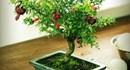 Những loại cây nhất định phải chưng trong nhà để rước tài lộc ngày Tết