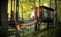 Cùng khám phá nhà cây đẹp thơ mộng giữa rừng