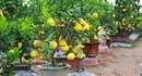 Vườn ngũ quả hàng trăm triệu đẹp mê hồn của 8X ở Hưng Yên