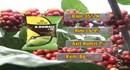 Sản phẩm phân bón N.HUMAT + TE vì một nền nông nghiệp Việt bền vững