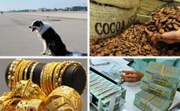 Kinh tế 24h: Tạm ngừng nhập khẩu lạc, hạt muồng, hạt cacao; giá vàng tuột dốc