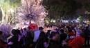 Nghìn người háo hức tham dự lễ hội hoa anh đào Hồ Gươm