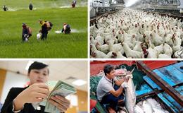 Kinh tế 24h: Giá gà từ chuồng ra siêu thị tăng 2-3 lần; Nhập khẩu thuốc trừ sâu tăng mạnh