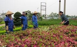 Chị Phan Thị Tuyết – Giám đốc Xí nghiệp cây xanh, Trưởng ban Nữ công CĐ Cty CP dịch vụ đô thị Vĩnh Yên (Vĩnh Phúc)