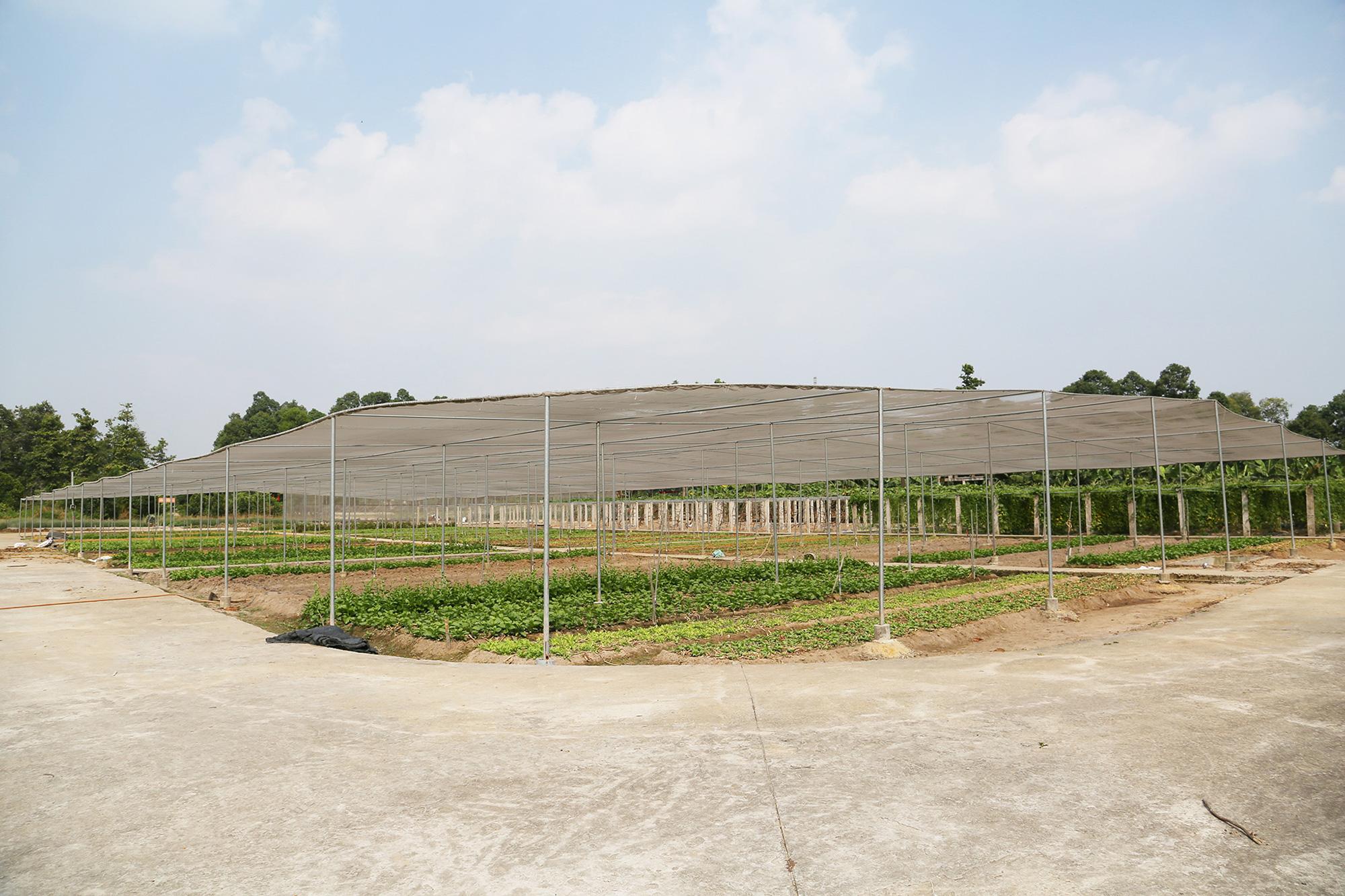 Mục kích khu tăng gia sản xuất rau sạch của Lữ đoàn Phòng không 71
