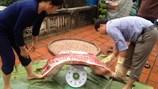 Chuyện ăn đụng lợn của đại gia ngày 30 tết