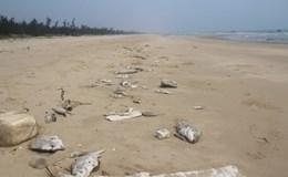 Chiều 27.4 công bố nguyên nhân cá chết hàng loạt ở miền Trung