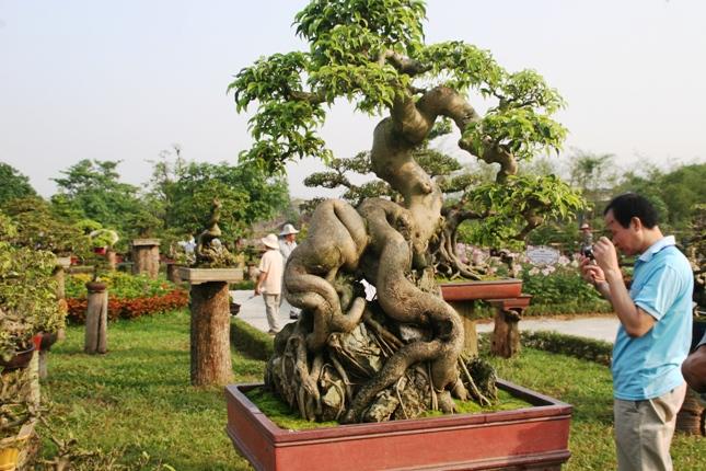 """Kết quả hình ảnh cho Bên trong khu """"vườn thượng uyển"""" trên mảnh đất của Giám đốc Sở Tài chính."""