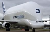 """Cận cảnh """"cá heo đầu gù"""" khổng lồ Airbus Beluga của Pháp"""