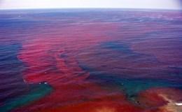 Thuỷ triều đỏ là gì? Cái gì gây ra thuỷ triều đỏ?