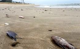 Vụ cá chết hàng loạt tại biển miền Trung: Vẫn chưa phát hiện bất thường