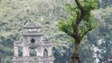 Hà Nội trồng mới một triệu cây xanh