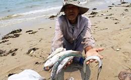 Khi nào ăn cá được?