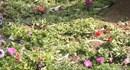 Vườn hoa, bãi cỏ ven Hồ Gươm tan hoang trong sáng mùng 1 Tết