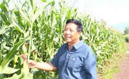 Xuân Lộc có nhiều nông dân  tỷ phú