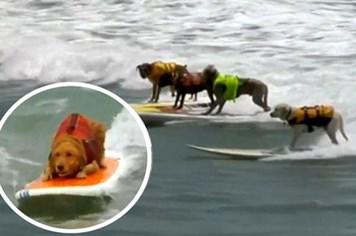 """Video: Xem các """"vận động viên chó"""" lướt ván điệu nghệ"""