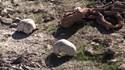 Tìm thấy 3 mộ tập thể chứa hàng trăm thi thể ở khu vực IS từng kiểm soát