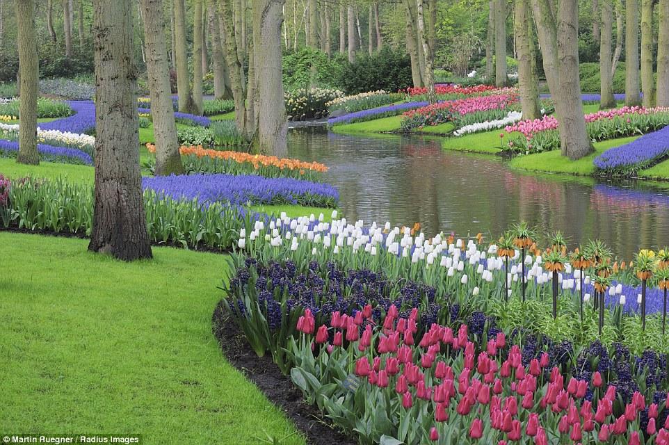 Mãn nhãn với những cánh đồng hoa đẹp nhất thế giới - H2