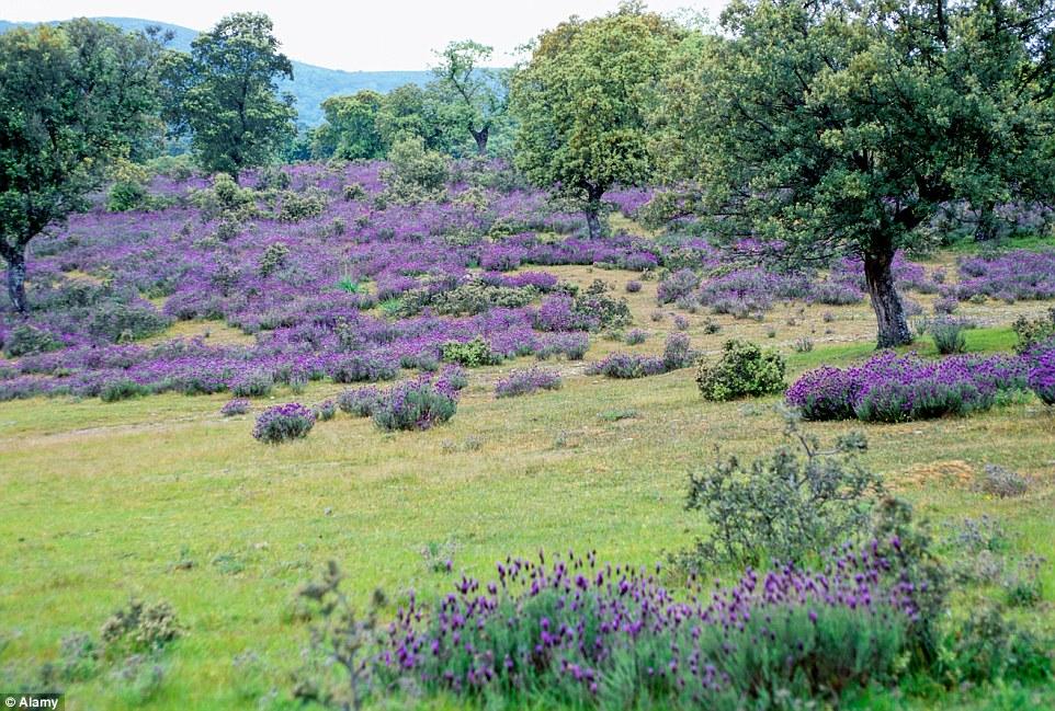 Mãn nhãn với những cánh đồng hoa đẹp nhất thế giới - H6