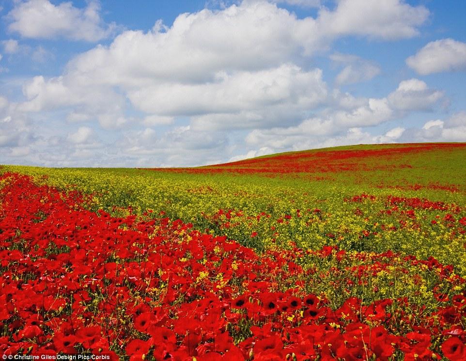 Mãn nhãn với những cánh đồng hoa đẹp nhất thế giới - H8