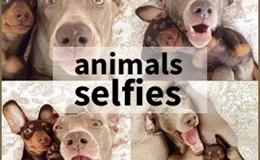Bật cười với những hình ảnh Selfies của động vật
