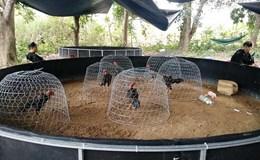 Khánh Hòa: Nổ súng khống chế 50 con bạc tại trường gà trên núi