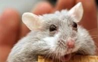 """Ngắm hình ảnh hài hước về biểu cảm """"sốc"""" của các loài động vật"""