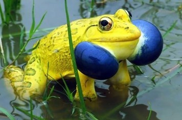 """Sửng sốt ngắm bộ ảnh cực """"sang chảnh"""" của loài ếch"""