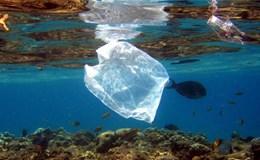 Năm 2050: Đại dương sẽ nhiều nhựa thải hơn cá