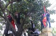 """Người dân trèo tường, leo cây xem nghi lễ chém """"ông ỉn"""" ở Ném Thượng, Bắc Ninh"""