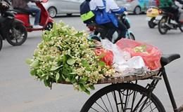 Hoa bưởi thôn quê ngát hương phố thị