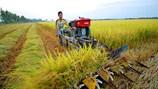 Tích tụ ruộng đất ở Đồng Tháp: Góp phần nâng cao hiệu quả sản xuất