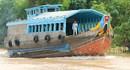 Ghe đục - phương tiện vận chuyển cá tra ở miền Tây