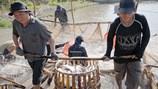 Sản xuất - tiêu thụ cá tra vùng ĐBSCL: Phải có chiến lược để tránh rủi ro