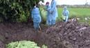 Bạc Liêu: Tăng cường kiểm soát dịch cúm gia cầm